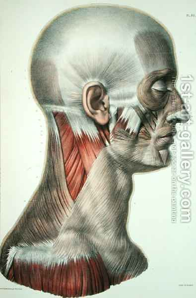 Musculature of the face by (after) Jacob, Nicolas Henri - Reproduction Oil Painting