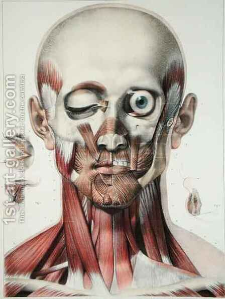 Musculature of the face with the orbit of the eye by (after) Jacob, Nicolas Henri - Reproduction Oil Painting