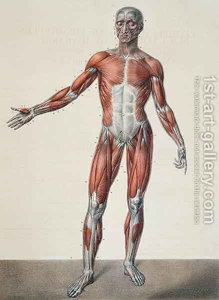 Anatomy of the human body 2 by (after) Jacob, Nicolas Henri - Reproduction Oil Painting