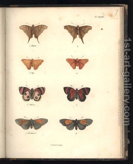 Lepidoptera by Baron Friedrich von Humboldt - Reproduction Oil Painting