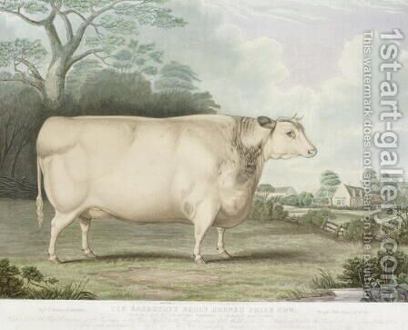 The Habertoft Short Horned Prize Cow by (after) Hubbard, B. - Reproduction Oil Painting