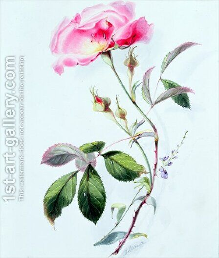 A Rose by James Holland - Reproduction Oil Painting