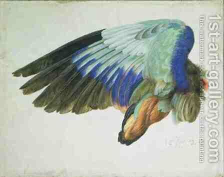 The Right Wing of a Blue Roller Coracia garrulus copy of an original by Albrecht Durer of 1512 by Hans Hoffmann - Reproduction Oil Painting
