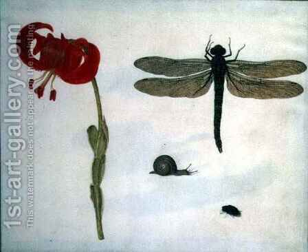 Study of a red tiger lily a snail a beetle and a dragonfly by Herman Henstenburgh - Reproduction Oil Painting