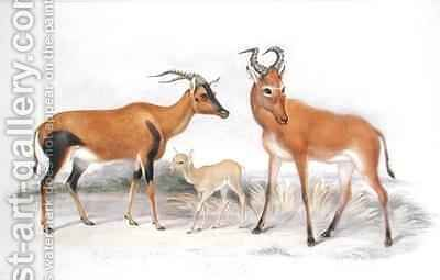 Damaliscus ancorrigum and Young and a Bubalis buselaphus from The Knowsley Menagerie by Benjamin Waterhouse Hawkins - Reproduction Oil Painting