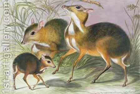 Javan chevrotain from The Knowsley Menagerie by Benjamin Waterhouse Hawkins - Reproduction Oil Painting
