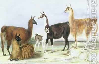 A Group of Llamas from The Knowsley Menagerie by Benjamin Waterhouse Hawkins - Reproduction Oil Painting