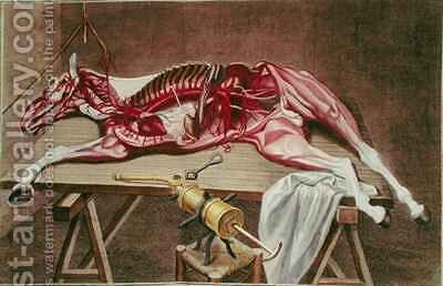 Dissection of a horse from Cours dHippiatrique ou Traite Complet de la Medecine des Chevaux by (after) Harguinier - Reproduction Oil Painting