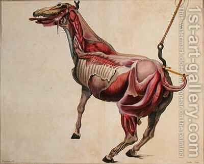 Flayed horse from Cours dHippiatrique ou Traite Complet de la Medecine des Chevaux by (after) Harguinier - Reproduction Oil Painting