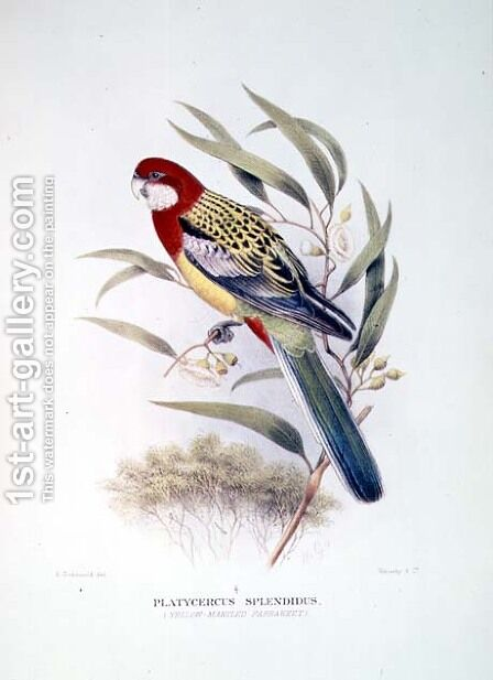 Yellow Mantled Parakeet from Birds of Australia by Hendrik Gronvold - Reproduction Oil Painting