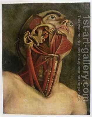 Cross section of the right hand side of the neck and face by Jacques - Fabien Gautier - Dagoty - Reproduction Oil Painting