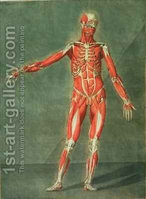 Superficial Muscular System of the Front of the Body by Arnauld Eloi Gautier DAgoty - Reproduction Oil Painting