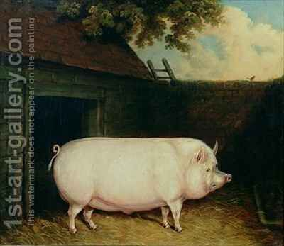A Pig in its Sty by E.M. Fox - Reproduction Oil Painting