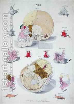 Bones of the skull by (after) Eisenberger, Nikolaus Friedrich - Reproduction Oil Painting