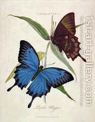 Butterfly Papilo Ulysses by Edward Donovan - Reproduction Oil Painting