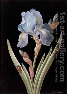Iris germanica with caterpillar and beetle by Barbara Regina Dietzsch - Reproduction Oil Painting