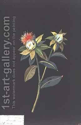 Scarlet Saff flower Carthamus tinctorius by Mary Granville Delany - Reproduction Oil Painting