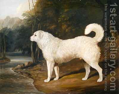 Portrait of a Dog Ross by David of York Dalby - Reproduction Oil Painting