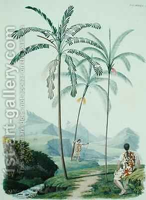 Palm trees in a mountainous part of South America by (after) D'Orbigny, Alcide - Reproduction Oil Painting