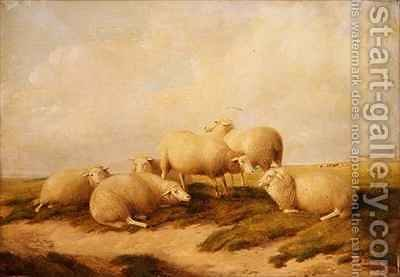 Sheep by (after) Cooper, Thomas Sidney - Reproduction Oil Painting