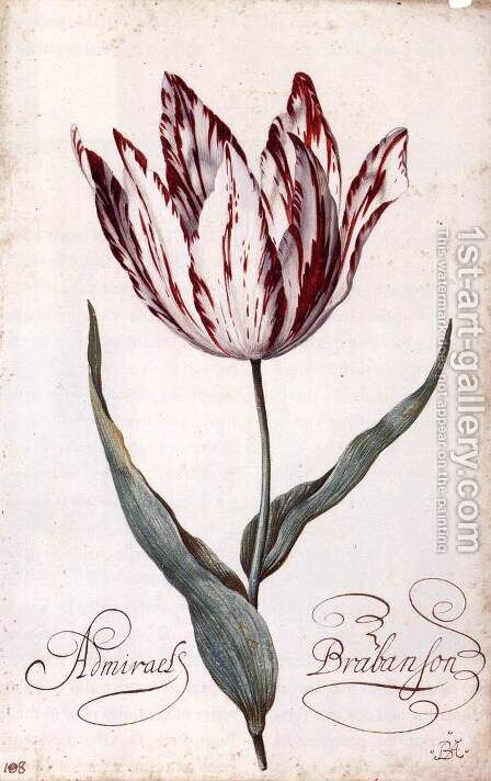 Tulip 2 by Balthasar Van Der Ast - Reproduction Oil Painting