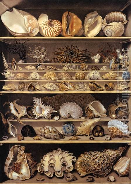 Selection of Shells Arranged on Shelves by Alexandre-Isidore Leroy De Barde - Reproduction Oil Painting