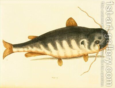 Catfish by Mark Catesby - Reproduction Oil Painting
