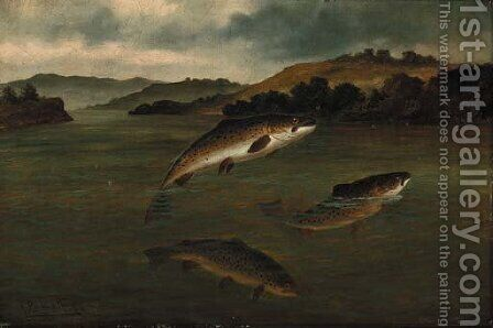Trout rising by A. Roland Knight - Reproduction Oil Painting