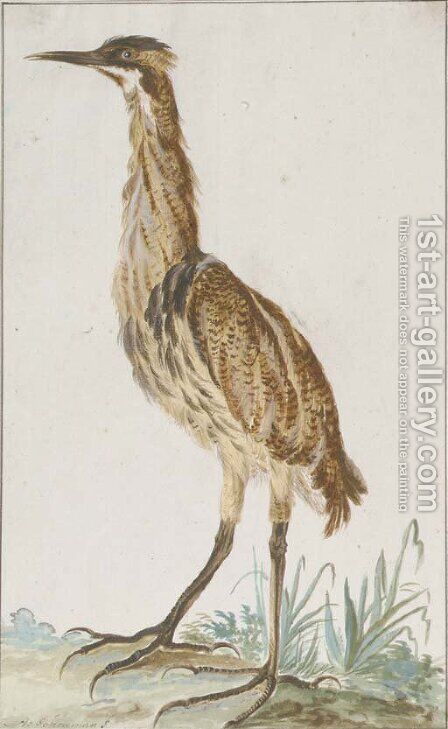 A bittern (Botaurus stellaris) in profile to the left by Aert Schouman - Reproduction Oil Painting