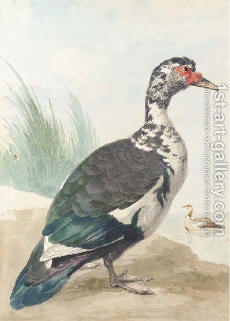 A West Indian goose by a pond by Aert Schouman - Reproduction Oil Painting