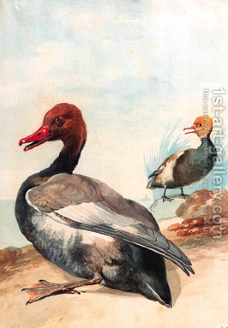 Red-crested porchard with Juvenile looking to the left at the water's edge, a sailing-boat in the background by Aert Schouman - Reproduction Oil Painting