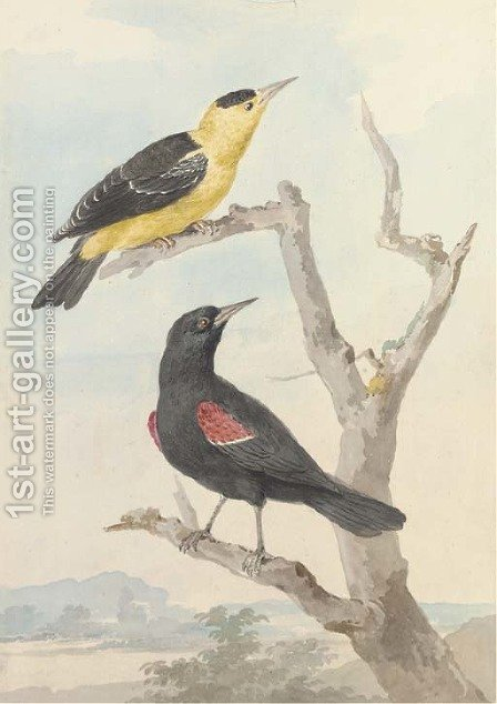 Two exotic birds on a tree by Aert Schouman - Reproduction Oil Painting