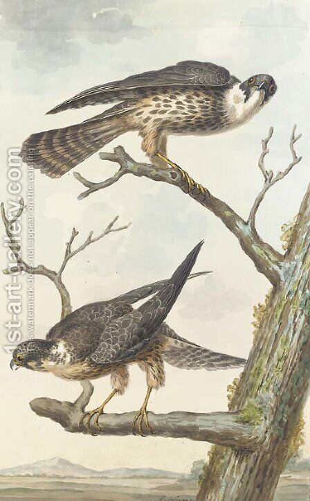 Two Merlins perching on a tree by Aert Schouman - Reproduction Oil Painting