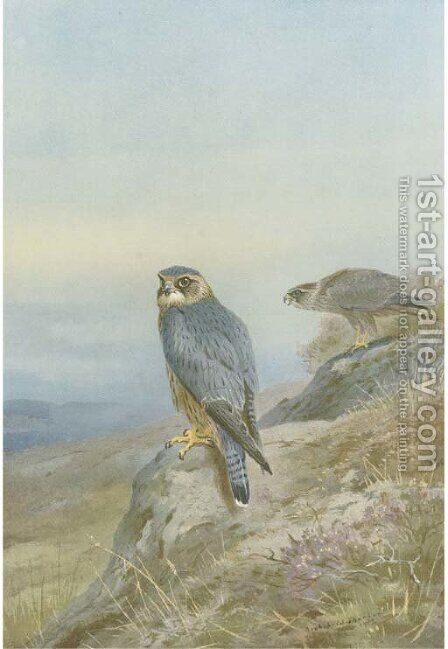 Birds of prey by Archibald Thorburn - Reproduction Oil Painting