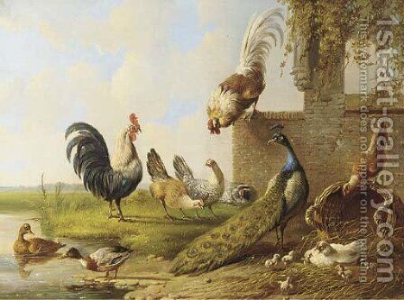 Poultry and a peacock by a ruin 2 by Albertus Verhoesen - Reproduction Oil Painting
