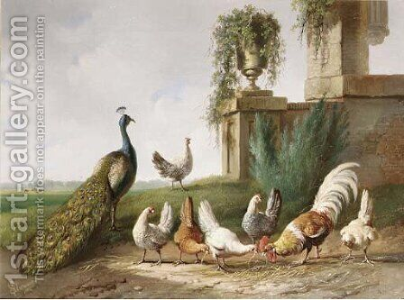 Poultry and a peacock in a meadow by Albertus Verhoesen - Reproduction Oil Painting