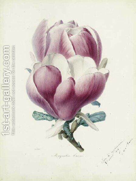 A Magnolia Flower by Alfred Riocreux - Reproduction Oil Painting