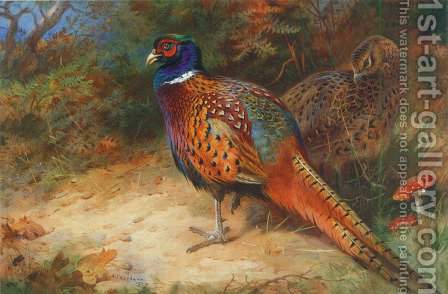 A Cock and Hen Pheasant by Archibald Thorburn - Reproduction Oil Painting