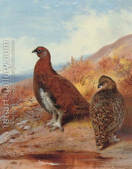 A pair of red grouse, in moorland by Archibald Thorburn - Reproduction Oil Painting