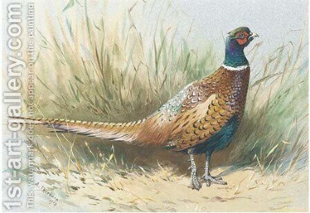 A pheasant by Archibald Thorburn - Reproduction Oil Painting