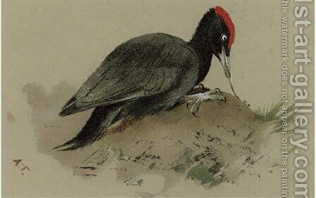 A Swedish woodpecker by Archibald Thorburn - Reproduction Oil Painting