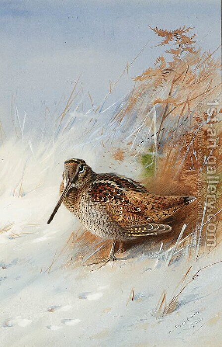 A Woodcock in Winter by Archibald Thorburn - Reproduction Oil Painting