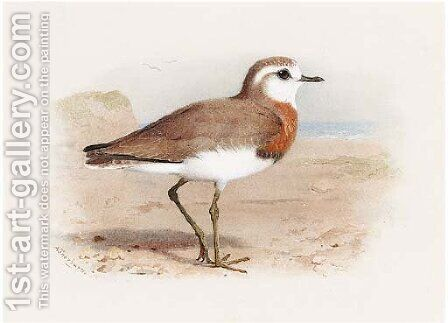 Caspian Plover by Archibald Thorburn - Reproduction Oil Painting