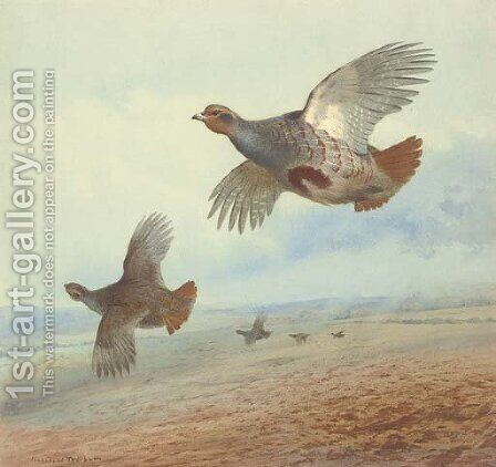 Partridge in flight by Archibald Thorburn - Reproduction Oil Painting