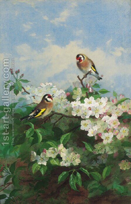 Goldfinches among apple blossom by Archibald Thorburn - Reproduction Oil Painting