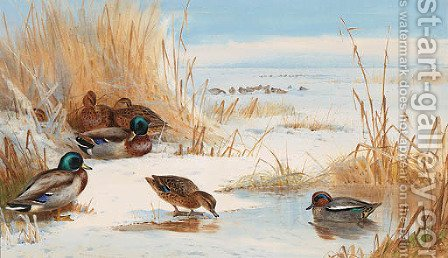 Mallard and Teal on a frozen Lake by Archibald Thorburn - Reproduction Oil Painting