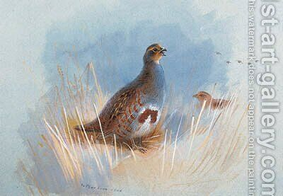 Partridges by Archibald Thorburn - Reproduction Oil Painting