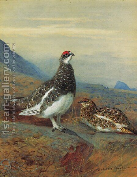 Ptarmigan in summer plumage by Archibald Thorburn - Reproduction Oil Painting
