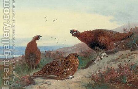 Red grouse on a rocky outcrop by Archibald Thorburn - Reproduction Oil Painting