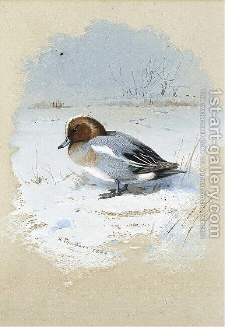 Wigeon by Archibald Thorburn - Reproduction Oil Painting